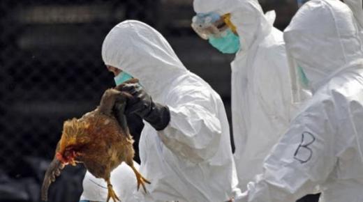 المانيا تقتل ما يصل إلى 70 ألف دجاجة بعد تفشي انفلونزا الطيور في مزرعة أخرى