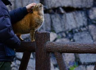 Ilustrasi Gambar Kisah Persahabatan Manusia Dengan Kucing