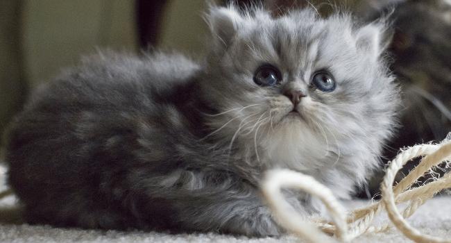 Kitten Looking Up, August 2012 by Belal Khan