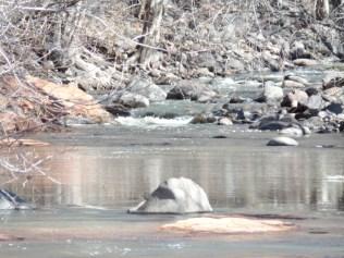 Beaver Creek, off Bell Trail