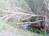 Hidden creek, Rice Canyon, Chula Vista