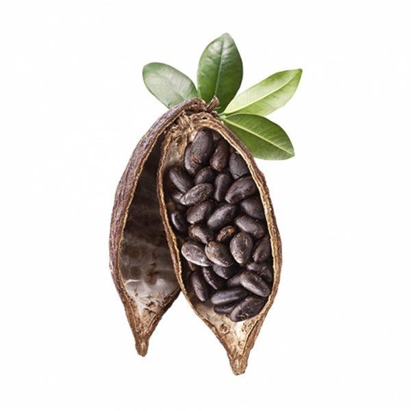 Cocoa Beans Butter 230g (8oz) 1