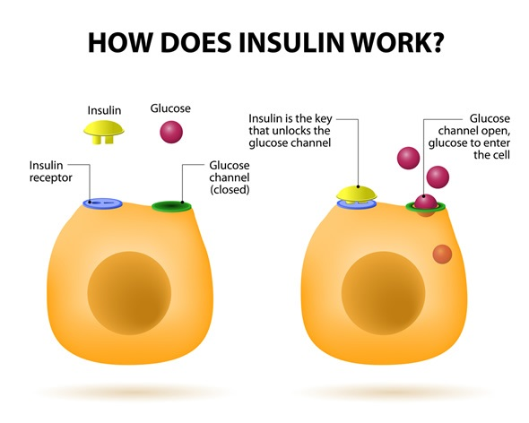 What is insulin and insulin resistance? 2