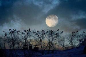 Crows Roosting