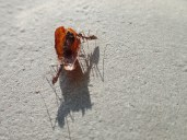 Thanks ants, thants
