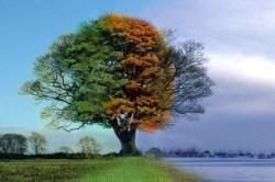 4-seasons-1-tree