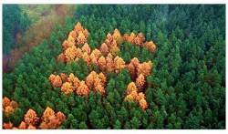 swastika in forest