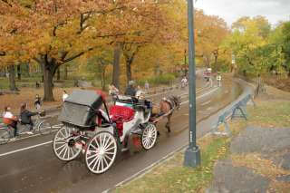 horse-carriage-01