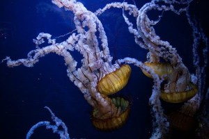 Spineless Jellyfish: After Everything That Has Happened, Does Being A 'Republican' Still Mean Something?