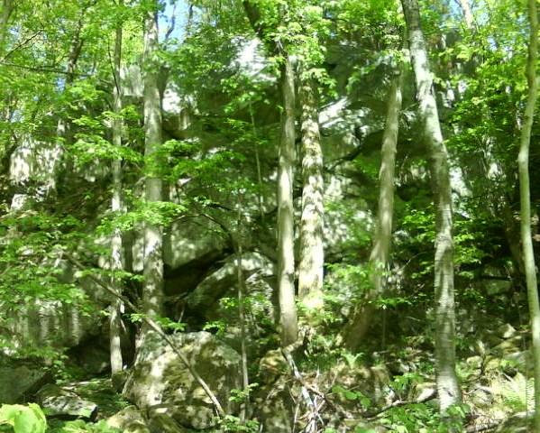 Vackra stenbranter och mäktig träd.