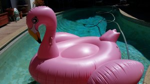 Your personal responsibility begins with your decision to jump on the flamingo