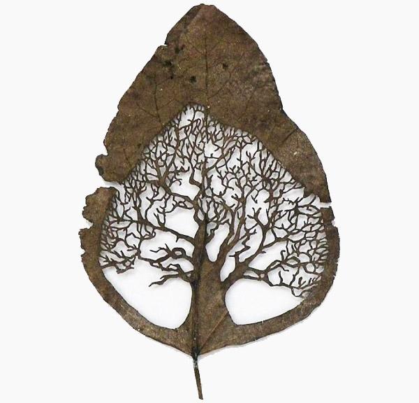 Art on leaves (3/4)