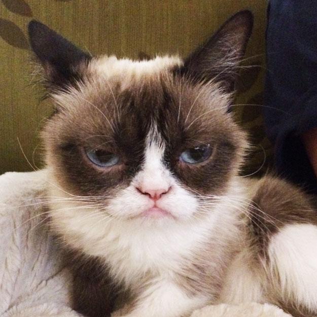 Grumpy Cat (2/2)