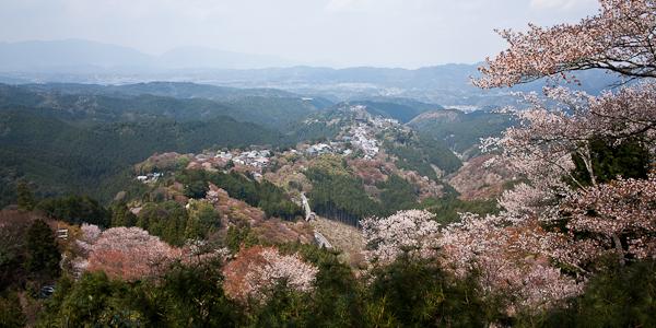kirsikankukat japanissa