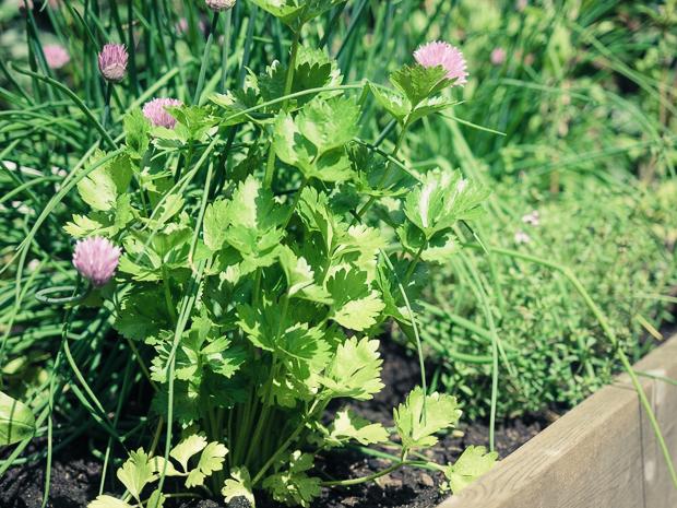 puutarhalaatikko-kesa2014-3
