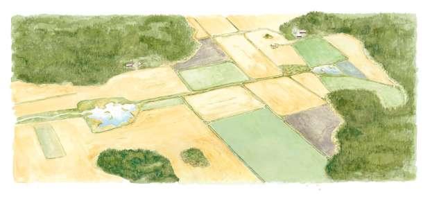 ...maatalouden töissä haluaa antaa riistalle mahdollisuuden menestyä.