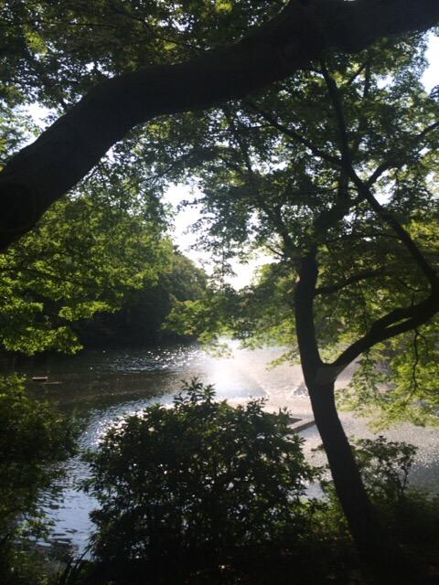 井の頭公園の噴水