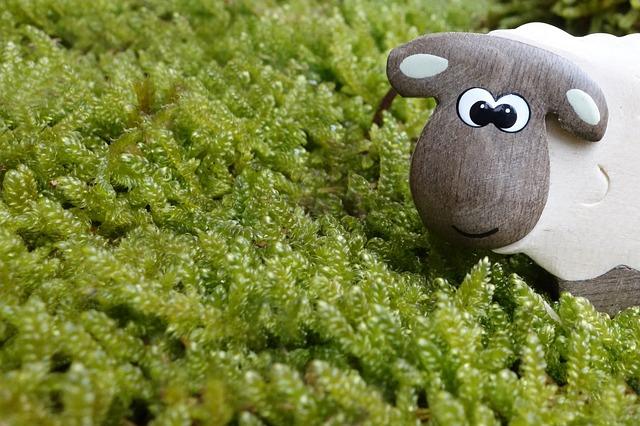 BLOG 羊 草原