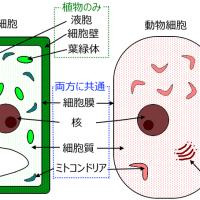 細胞のつくり