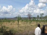 Kiambere-plantagen i mars 2013