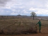 Kiambere-plantagen i oktober 2011