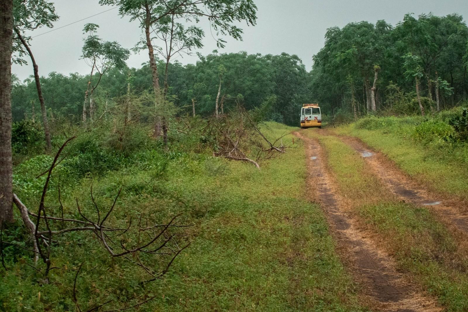 Vi åkte runt med buss på plantagen då vi inte tilläts egna promenader av säkerhetsskäl.