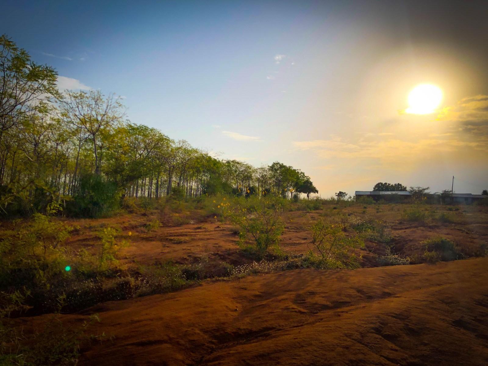 Precis utanför Kiambere-plantagen där den torra semi-öknen tar vid. Samma skola och gräns som syns på den tidigare översiktsbilden mellan plantagen och den röda marken.