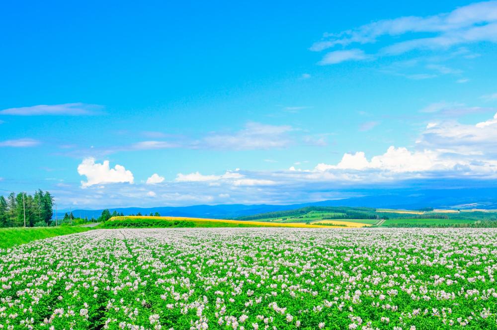 ANAプラチナ&SFC特典を満喫する北海道への旅