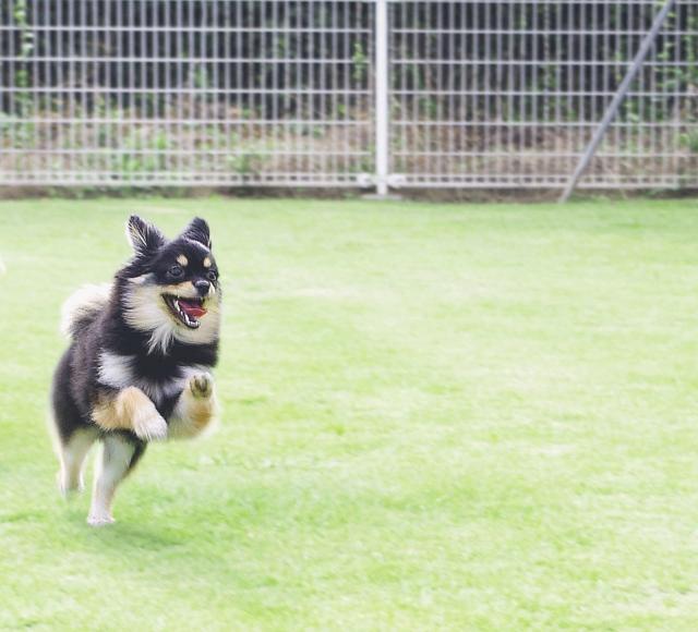 ハピタスからドットマネーへの交換が開始されて喜ぶ犬