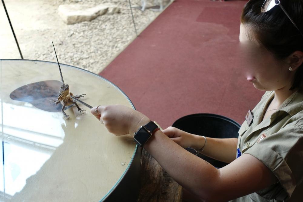 シーライフエリマキトカゲの餌付け