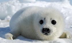 New Seal Cub Clubbing Club Summary DOTABUFF Dota 2 Stats