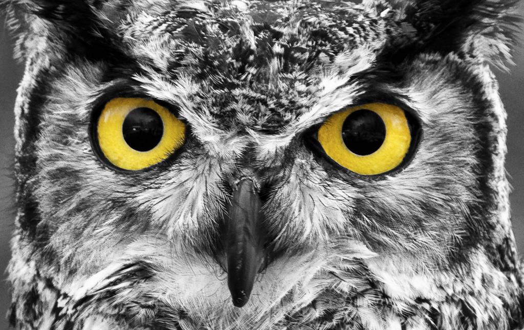 Owl Eyes Summary DOTABUFF Dota 2 Stats
