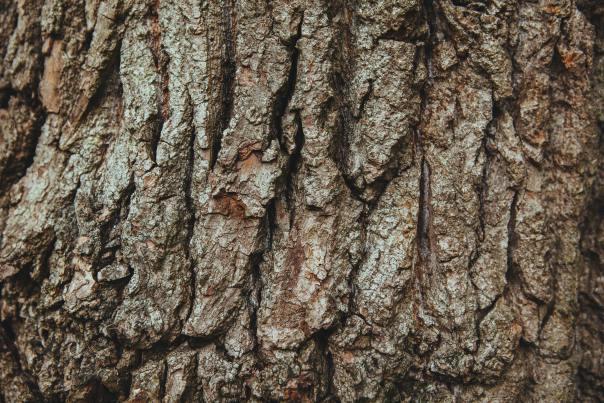 Digte, poesi og gamle egetræer