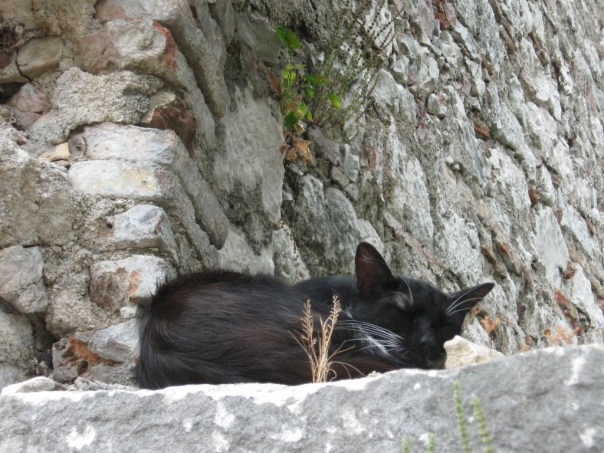 Katte Kotor