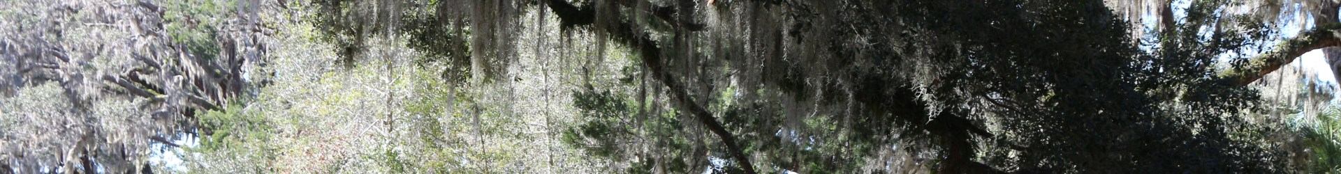 Lands and Legacies of Cumberland Island National Seashore