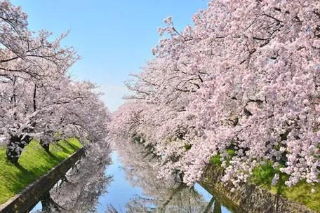 愛知県の桜名所10選!見頃に祭りやお花見ライトアップに行くならココがおすすめ!│観光・旅行ガイド - ぐるたび