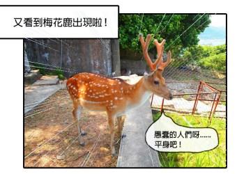  旅遊漫畫 台灣的這座島上竟然有上百隻的梅花鹿!-馬祖大坵