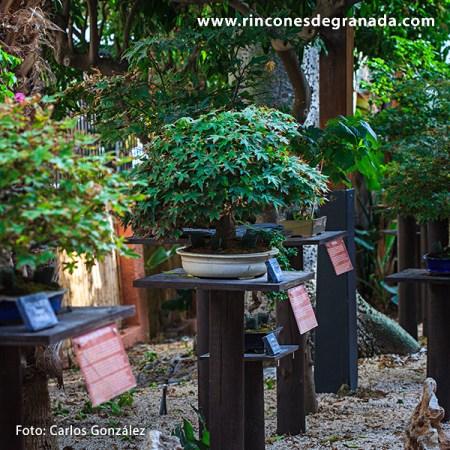 Jardín museo de Bonsái de Andalucía
