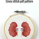 Anatomical kidneys cross stitch pdf pattern
