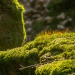 Mikrokosmos Waldboden