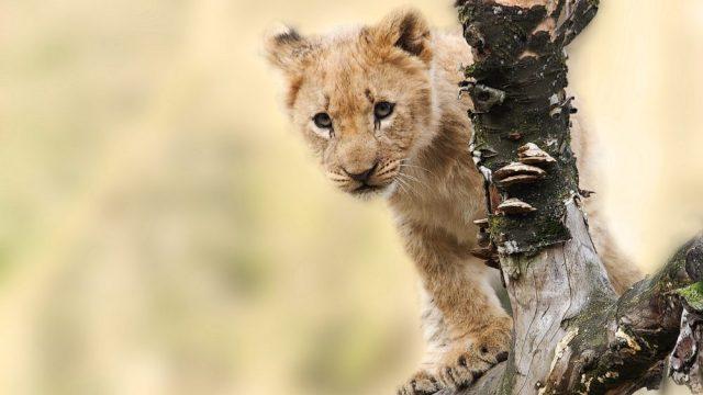 lion mediaカスタマイズ