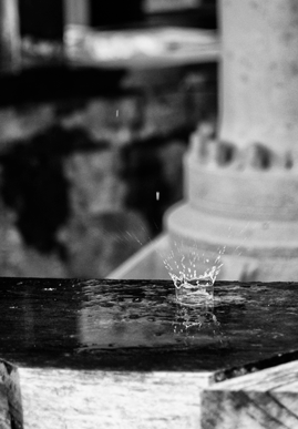 A fast shutter speed captures a raindrop landing whilst a wide aperture creates a lovely blurred background which lends more clarity to the subject f/1.8 1/500s ISO 200