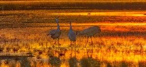Family in the Golden Light, Photo by Ed MacKerrow