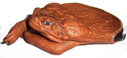Image result for dried frog purse