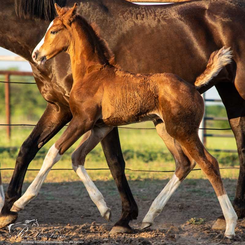 20180523 DSC 2011 1 Foals