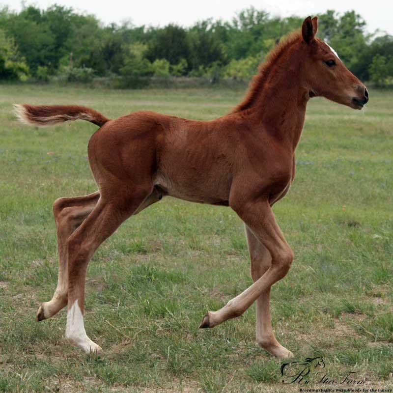 20140427 999 42 Foals