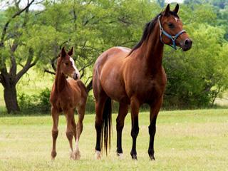 Carielle Fürstenreich Rio Star Farm 2 Home