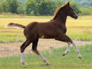 Rio Star Farm Foal Page
