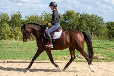 Picture of Eleanor RSF (Sagnol x Esbjerg)