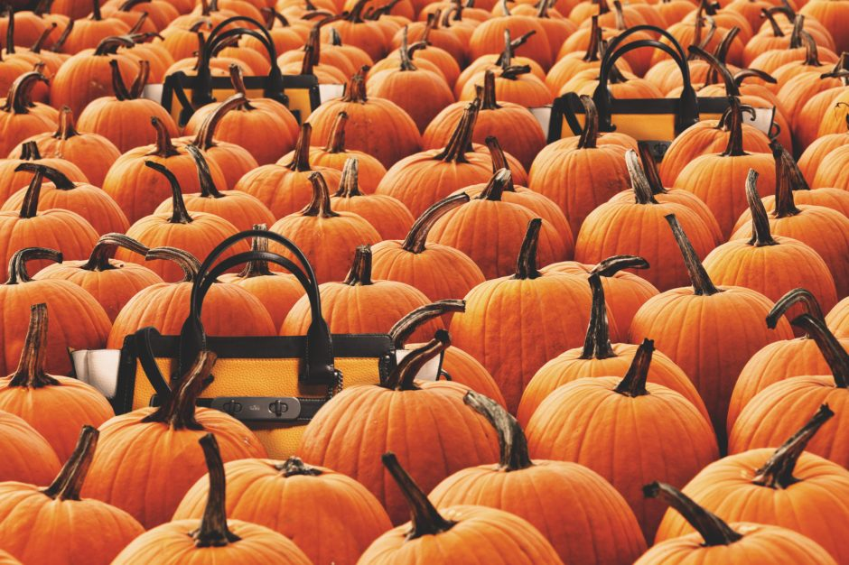 COACH | Halloween 2015: Pumpkin Patch